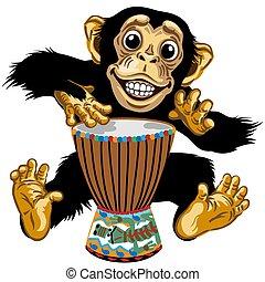 schlagzeugspieler, schimpanse, karikatur, gebürtig, afrikanisch