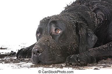schlammig, dreckige , hund