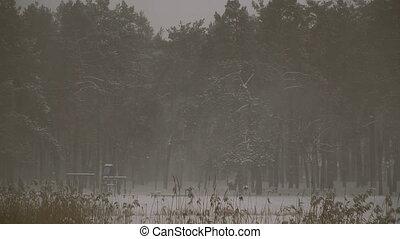 schlechte, weather., schneesturm, und, schnee