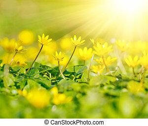 schließen, blumen, auf, gelber