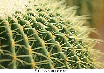 schließen, kaktus, auf