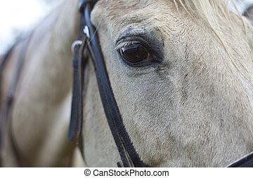 schließen, pferd, auge, auf