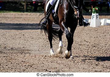 schließen, pferd, beine