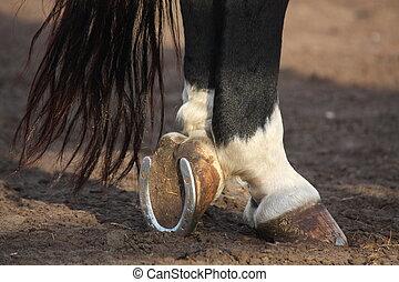 schließen, pferd, schwarz, auf, hoofs