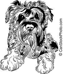 schnauzer, bosquejo, casta, perro, mano, vector, dibujo