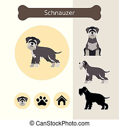 Schnauzer Dog Breed Infographic - Illustration, Front and ...