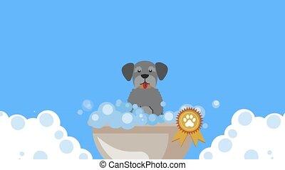 schnauzer dog taking a bath animation ,4k video animated
