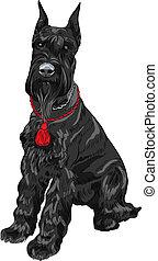 schnauzer, gigante, sentado, perro, vector, negro