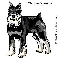 schnauzer, miniature, vecteur, illustration
