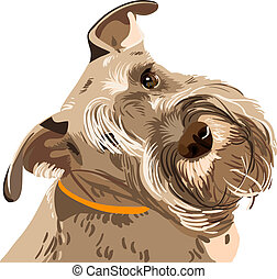 schnauzer, rasse, hund, miniatur, vektor, closeup