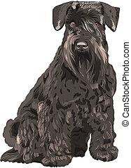 schnauzer, sentado, perro, miniatura, vector, negro