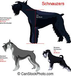 schnauzers, vector, set