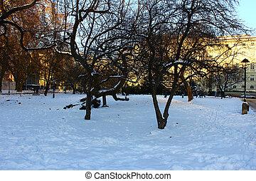 schnee, bäume, hintergrund