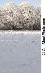 schnee, bäume
