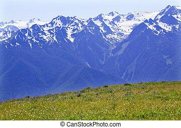 schnee, berge, hurricaine, bergrücken, olympischer nationalpark, staat washington , pazifischer nordwesten, wildflowers, grün, täler, bergrücken, linie