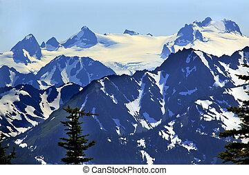 schnee, berge, hurrikan- kante, olympischer nationalpark, staat washington , pazifischer nordwesten, closeup, immergrün