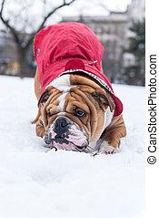 schnee, spielende