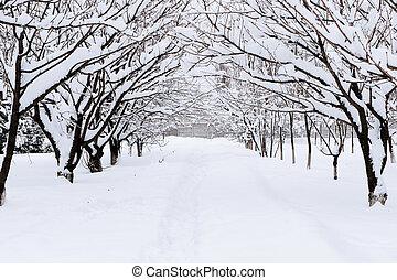 schnee, winter, gasse, wald