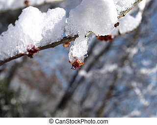 schnee, zweig