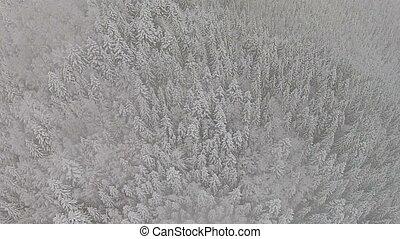 schneebedeckt, bäume, in, a, bergig, bereich, während, a,...