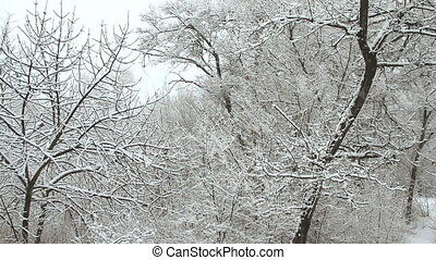 schneefall, in, a, winter, park, mit, schnee