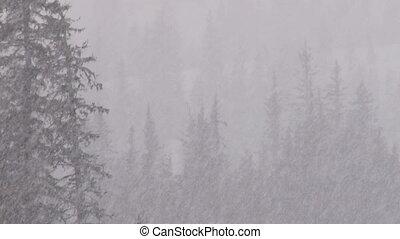 schneesturm, wald, 2