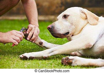 Nagel Schneiden Hund. Blaues Werkzeug Hund Auf Spezialitu00e4t Nagel Schneiden Hintergrund ...