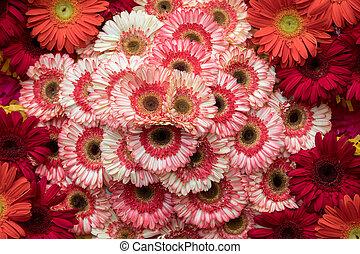 schoenheit, bunte, dekoration, floristic, blumen, gerbera