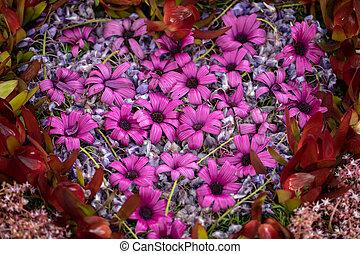 schoenheit, bunte, floristic, dekoration, tropische blumen