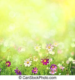schoenheit, fruehjahr, und, sommerlandschaft, mit, frisch, gänseblumen, blumen