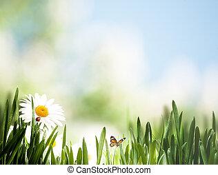 schoenheit, jahreszeiten, landschaftsbild, mit, wilde blumen, und, gras