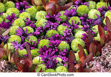 schoenheit, tropische , floristic, bunte, dekoration, blumen