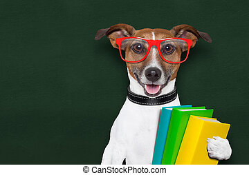 school dog - smart and clever dog with books and glasses