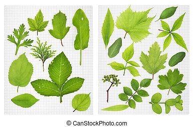 School herbarium - green leaves of the European plants on ...