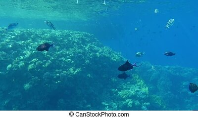School of black middle-size fish swimming in the light blue...