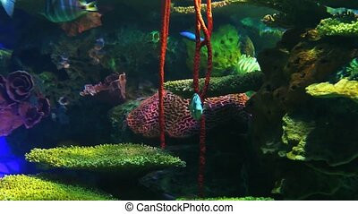 Bright Tropical Fish swim in colorful coral