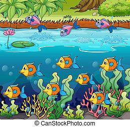 School of fish - Illustration of a school of fish in the...