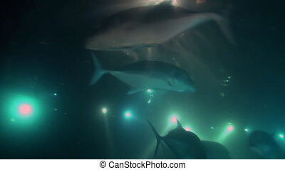 School of fish on background of night lights underwater in sea of Maldives. Swimming in world of colorful beautiful wildlife. Inhabitants in search of food. Abyssal relax diving.