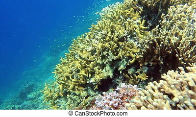School of fish on the coral reef