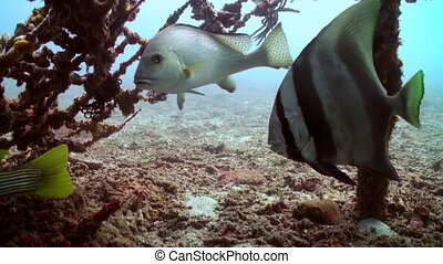 School of fish on wreck on the sea sandy bottom.