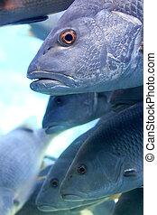 school of fish in aquarium