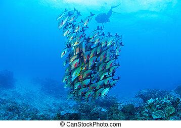 School of Fish Sodwana