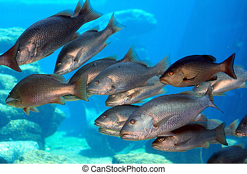 school of fish - a school of fish swimming in the tank