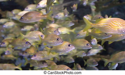 School of Fish Swimming