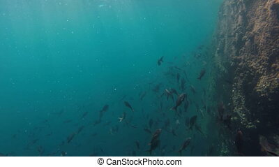School of fish swimming in reef underwater