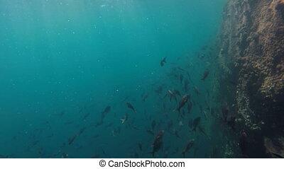 School of fish swimming in reef underwater