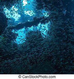 School of Glass Fish inside Shipwreck
