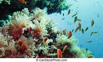 School of tropical fish in a colorful coral reef with water...