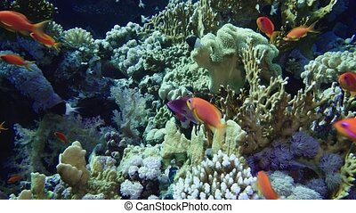 School of tropical fish in a colorful coral reef with water surface in background, Red sea, Egypt.