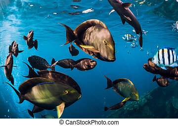 School of tropical fish in blue ocean. Underwater sea world with fish.